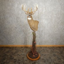 Whitetail Deer Shoulder Mount For Sale #21012 @ The Taxidermy Store