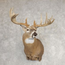 Whitetail Deer Shoulder Mount For Sale #21068 @ The Taxidermy Store