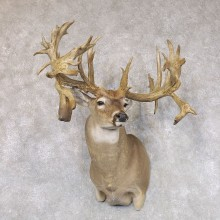 Whitetail Deer Shoulder Mount For Sale #22502 @ The Taxidermy Store