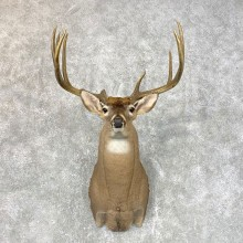 Whitetail Deer Shoulder Mount For Sale #23981 @ The Taxidermy Store