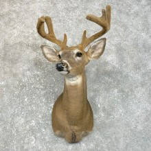 Whitetail Deer Shoulder Taxidermy Mount For Sale #25114 @ The Taxidermy Store.jpg