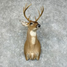 Whitetail Deer Shoulder Taxidermy Mount For Sale #25429 @ The Taxidermy Store.jpg