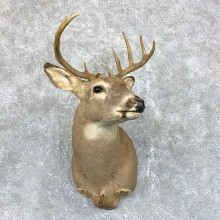 Whitetail Deer Taxidermy Shoulder Mount For Sale #23815 @ The Taxidermy Store