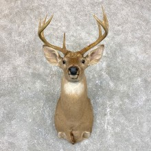 Whitetail Deer Taxidermy Shoulder Mount For Sale #23817 @ The Taxidermy Store