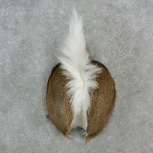 Whitetail Deer Rump Mount For Sale #17150 @ The Taxidermy Store