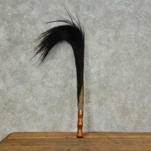 Wildebeest Tail Flyswatter For Sale #16263 @ The Taxidermy Store