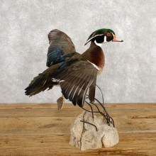 Wood Duck Taxidermy Bird Mount For Sale #18790 @ The Taxidermy Store