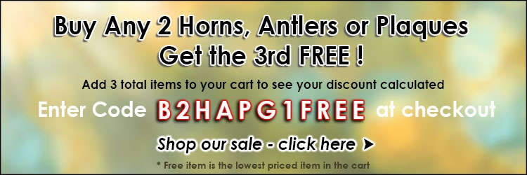 Buy 2 Horns Antlers Plaques Get 1 Free - The Taxidermy Store