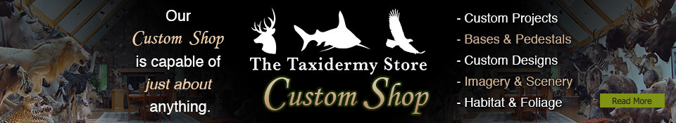 The Taxidermy Store's Custom Shop