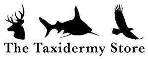 The Taxidermy Store